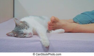 cat is sleeping at the feet of the owner of the person. cat...