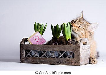 Cat is smelling a plant - Young beautiful cat is smelling...