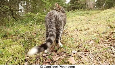 Cat is walking on the green grass at the forest. - Pretty...