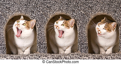 Cat is yawning continuous action