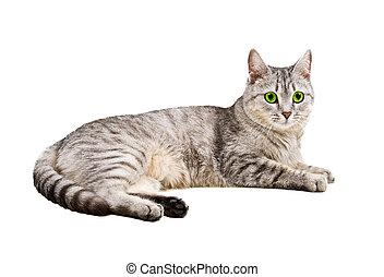 cat isolated on white background