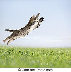 Cat jumping in green grass