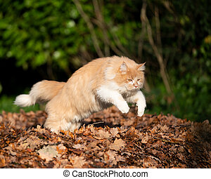 cat jumping over pile of autumn leaves