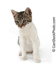 Cat kid - Isolated cat
