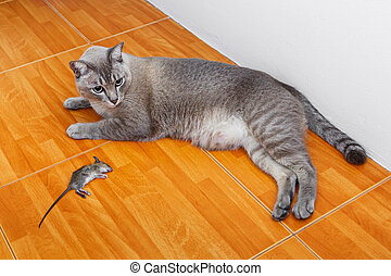 Cat kill rat - Close up Thai cat kill rat or mouse on...