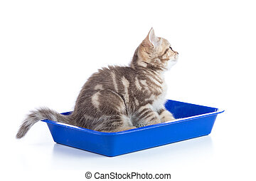 Cat kitten in the tray. Isolated.