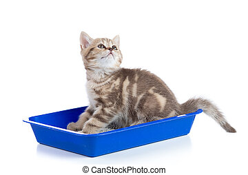 cat kitten in toilet tray box with litter isolated on white