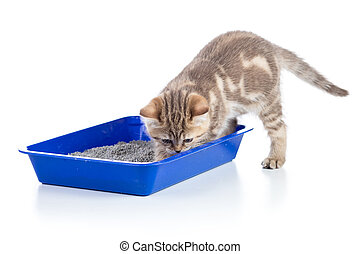 cat kitten in toilet tray litterbox isolated