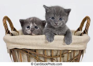Cat - Kittens in a Basket