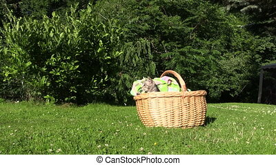 cat kitty wicker basket - Little kitty cat jump out of...