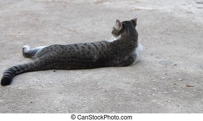 Cat laying down on concrete