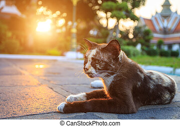 Cat laying on the ground in the park with sunset and lens flare effect