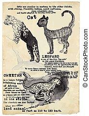 Cat, Leopard, Cheetah - vector, placard