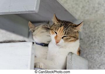 cat lick her family at the box
