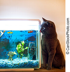 cat licking his lips next to a fish tank with goal fish in it.