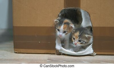 cat licks the kitten. Little kittens in the house and...