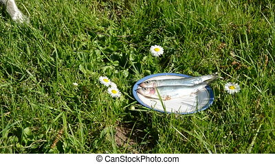 cat like fish in the plate on grass