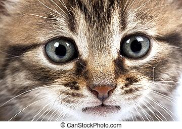 Cat - Little cat in the white bakcground