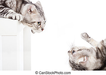 cat looking at cat