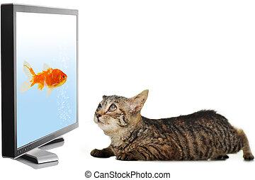 Cat looking at fish on display