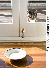 Cat looking at saucer of milk out side glass door