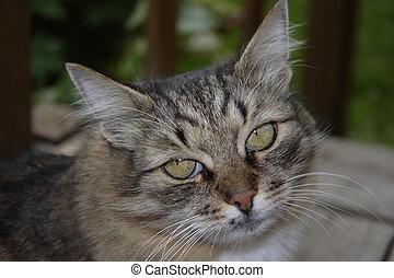 Cat looking at the camera.