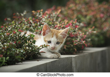 Cat looking from behind the plant