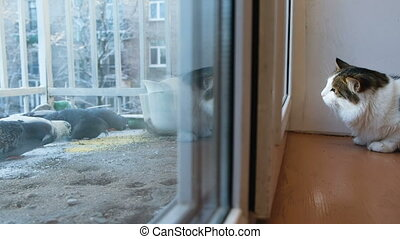 Cat looking out the window at the birds, pecking at seeds on...