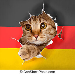 Cat looking up through hole in paper German flag