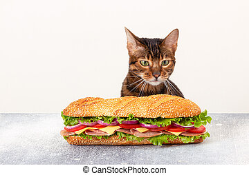 Cat looks at the big sandwich with a hungry look. Fast food.