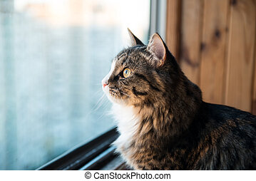 cat looks out the window. Beautiful cat sitting on a windowsill and looking to the window