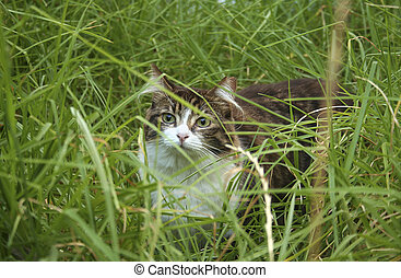Cat Lost in Tall Grass
