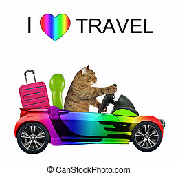 Cat loves to travel