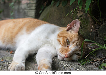 Cat lying in the corner to rest. - Ginger tabby cat lying in...