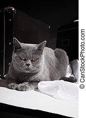 Cat lying near suitcase