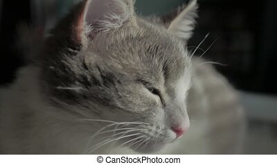 cat lying on balcony, selective focus. the cat is basking in...