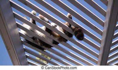 cat lying on perch against sun