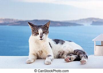 Cat lying on stone wall in Oia town, Santorini, Greece. Aegean sea