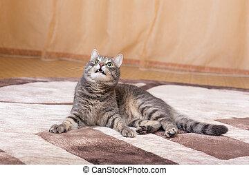 cat lying on the carpet