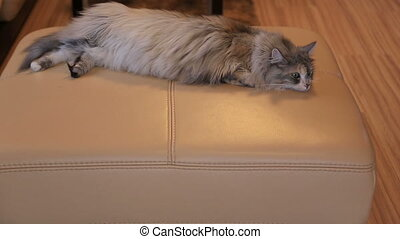 cat lying on the couch