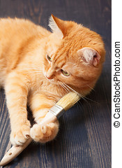 Cat lying on the floor with a brush