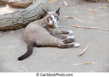 Cat lying on the ground