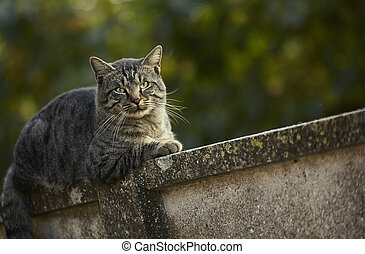 Cat lying on the wall