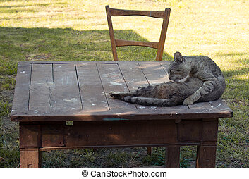 Cat lying on the wooden table