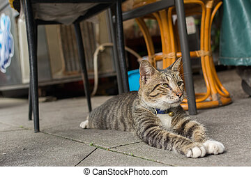 Cat lying to rest. - Tabby cat lying under the table to rest...