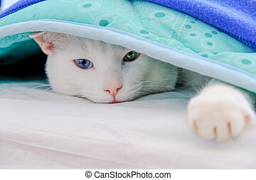 Cat lying under a blanket and stretched out his paw