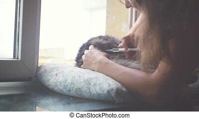 cat., maine, vétérinaire, injection, marques, nègre