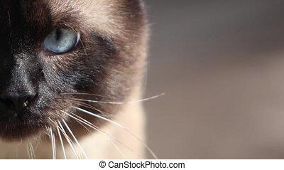cat muzzle Morphing  - feline evolution  close-up