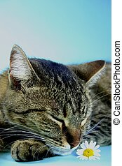Cat Nap - Cat taking a nap against blue background with...