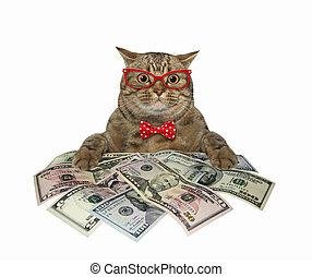 Cat near big pile of dollars 3